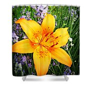 Asiatic With Lavender  Shower Curtain