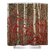 Aspen And Berries Shower Curtain