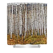 Aspen And Ferns Shower Curtain