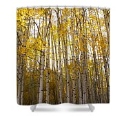 Aspen Autumn Shower Curtain