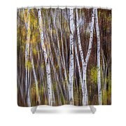 Birch Trees At Lake Maria State Park Minnesota Shower Curtain