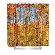 Aspen Fall Foliage Portrait Red Gold And Yellow  Shower Curtain