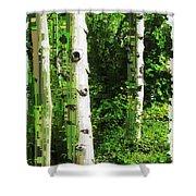 Aspen Grove 2 Shower Curtain