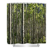Aspen Grove Along Independence Pass II 2009 Shower Curtain