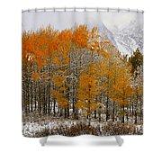 Aspen Grove Along The Snake River Grand Teton National Park Shower Curtain