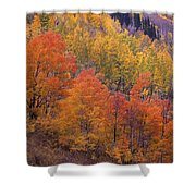 Aspen Grove In Fall Colors Shower Curtain