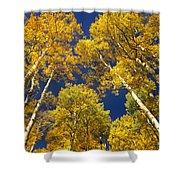 Aspen Grove In Fall Shower Curtain