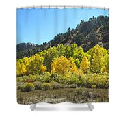 Aspen Grove In The Fall Shower Curtain