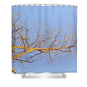 Aspen In The  Autumn Sun Shower Curtain by Elaine Booth-Kallweit