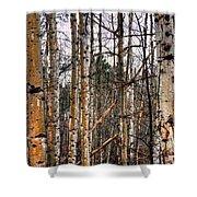 Aspen Patterns 14438 Shower Curtain
