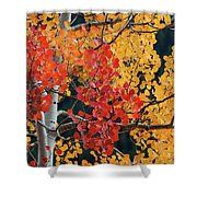 Aspen Reds Shower Curtain