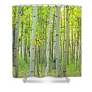 Aspen Tree Forest Autumn Time  Shower Curtain