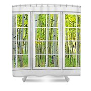 Aspen Tree Forest Autumn Time White Window View  Shower Curtain by James BO  Insogna