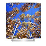 Aspen Tree Tops Shower Curtain