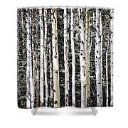 Aspen Tree Trunks Shower Curtain