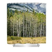 Aspen Trees Along The Bow Valley Shower Curtain