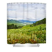Aspen Trees And Wildflowers Shower Curtain