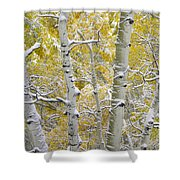 Aspen Trees Covered With Snow Shower Curtain