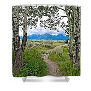 Aspen Trees On Trail To Jackson Lake At Willow Flats Overlook In Grand Teton National Park-wyoming  Shower Curtain
