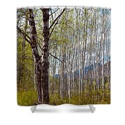 Aspen Trees Proudly Standing Shower Curtain by Omaste Witkowski