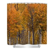 Aspens Ablaze Shower Curtain