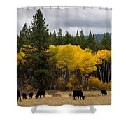 Aspens And Cows Shower Curtain