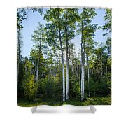 Aspens At Sunrise 1 - Santa Fe New Mexico Shower Curtain