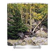 Aspens From Rocks Shower Curtain