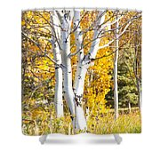 Aspens In Fall Shower Curtain