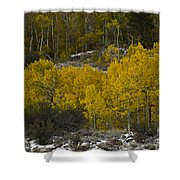 Aspens In Snow Shower Curtain