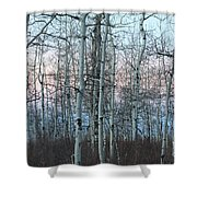 Aspens In Twilight Shower Curtain