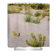 Assateague Dunes 2 Shower Curtain