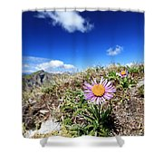 Aster Alpinus Shower Curtain