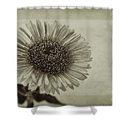 Aster With Textures Shower Curtain