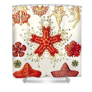 Asteridea Shower Curtain