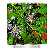 Asters And Scarlet Paintbrush On Swan Lake Trail In Grand Teton National Park-wyoming  Shower Curtain
