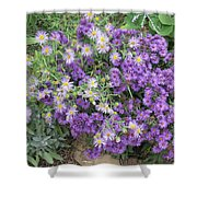 Asters Light And Dark Shower Curtain