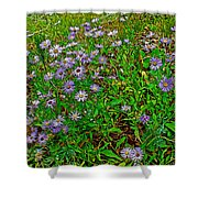Asters On Heron Lake Trail In Grand Teton National Park-wyoming- Shower Curtain