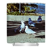 At Flight-1 Shower Curtain