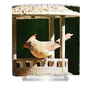 At My Birdfeeder Shower Curtain