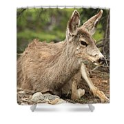 At Rest In The Rockies Shower Curtain