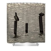 Seadrift Texas Birds At Rest Shower Curtain