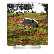 At Ruchama Forest Israel 1 Shower Curtain