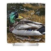 At The Duck Pond V5 Shower Curtain