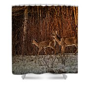 At The Edge Of The Woods Shower Curtain
