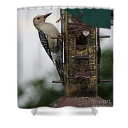 At The Feeder Shower Curtain