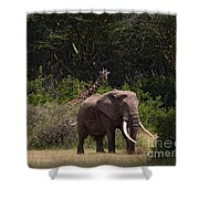 At The Foot Of Kilimanjaro Shower Curtain
