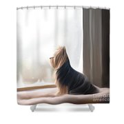 At The Window Shower Curtain