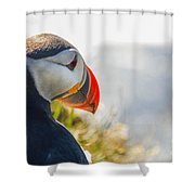 Atalantic Sea Puffin In Close Up Shower Curtain