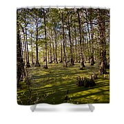 Atchafalaya Swamp   #6913 Shower Curtain